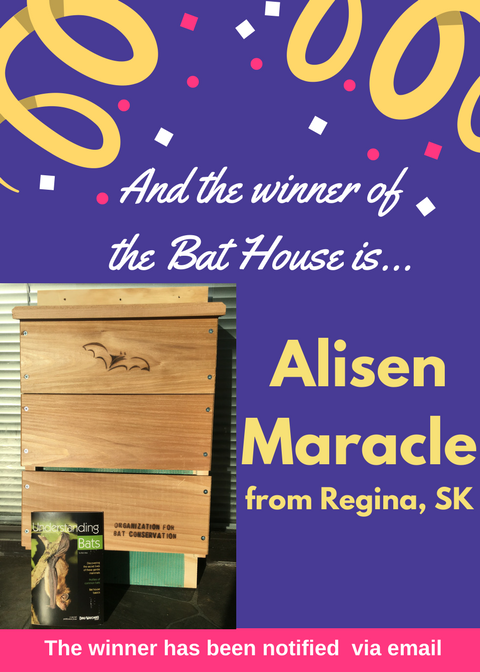Bat House Winner